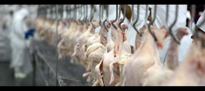 A processadora de aves possui um complexo frigorífico em Boituva (SP) e exporta para mais de 50 países. (Foto Divulgação Web)